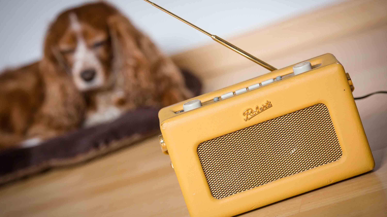 Hallo Hasso, es el nombre del programa perruno la cual busca brindar compañía a la mascota en situaciones de soledad en el hogar