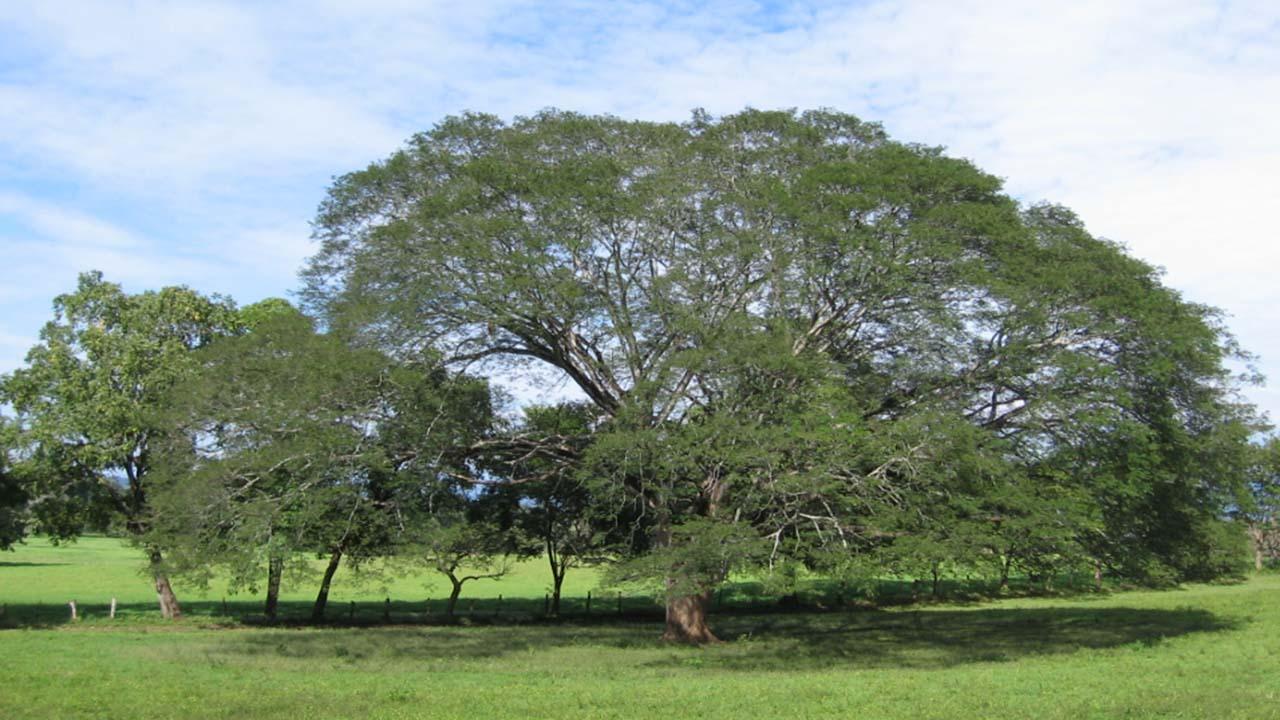 El árbol es hincha del club Resistencia