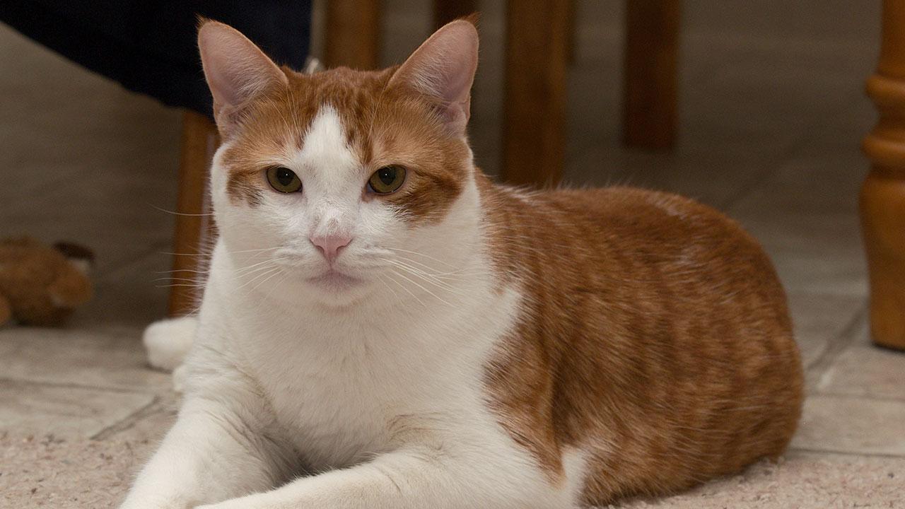 Mimarlos no es lo único que el gato necesita, pues con ciertas medidas de seguridad peudes contribuir a que tenga una mejor calidad de vida eliminando riesgos
