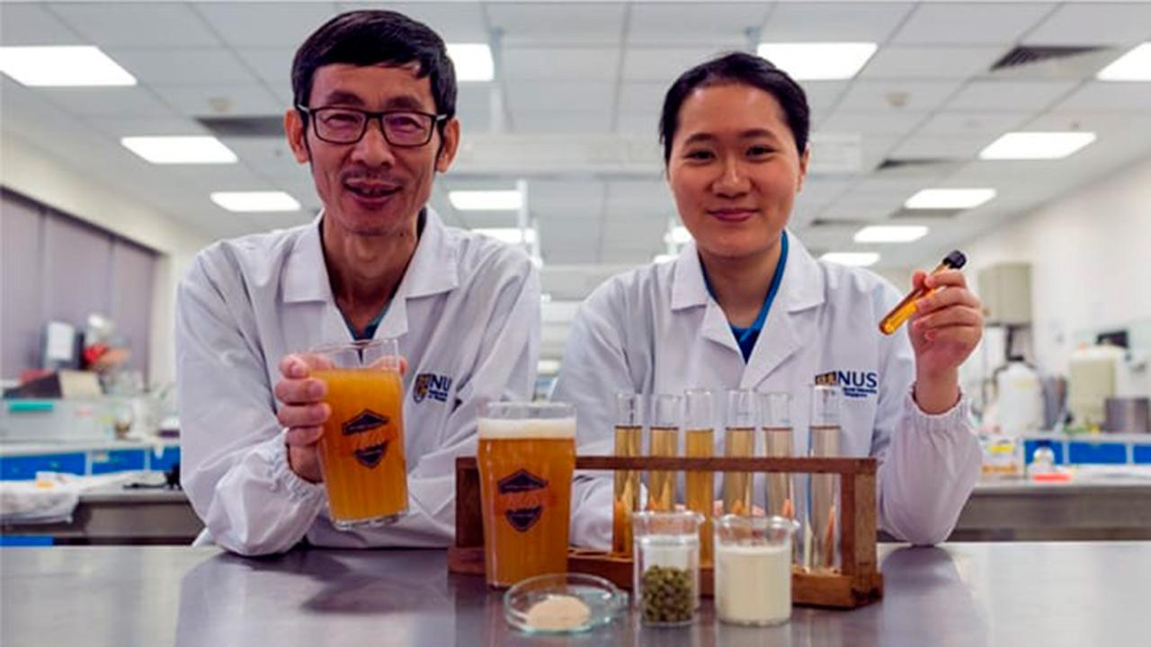 Investigadores de la Universidad Nacional de Singapur desarrollaron la bebida a base de ingrediente probióticos Científicos crean primera cerveza saludable
