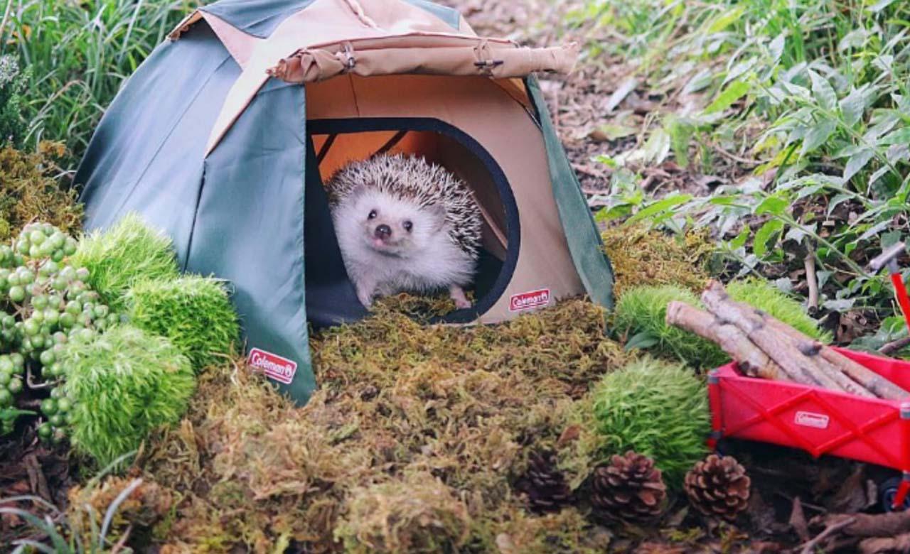 Este animalito se fue a acampar en el bosque