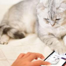 Mujer encuentra su gato gracias a Tinder