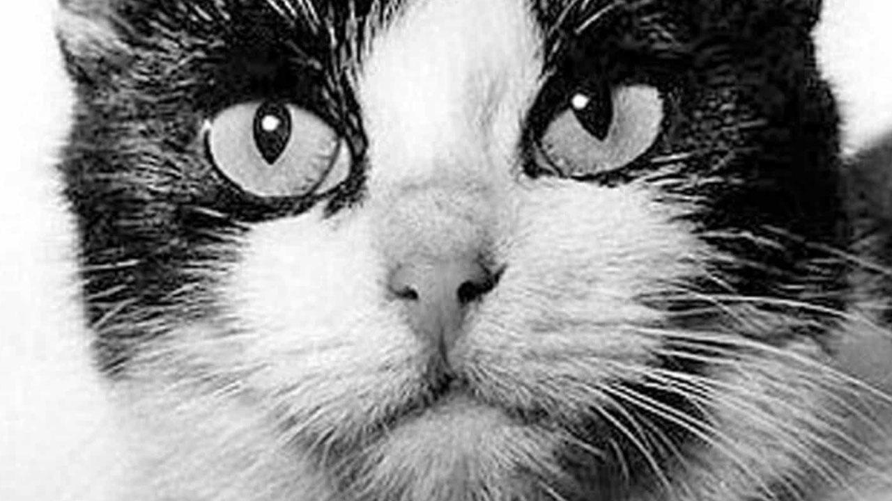 Felicette es el nombre de este felinos espacial