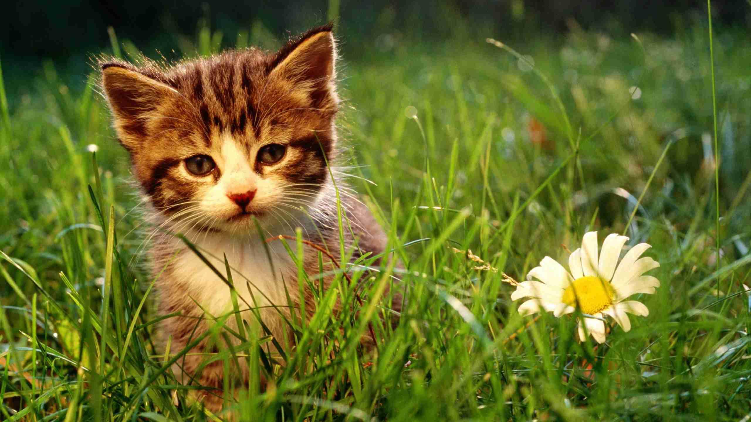 La flor navideña o de pascua no es dañina para los felinos como se cree pero existen otras que ponen en riesgo su salud y vida