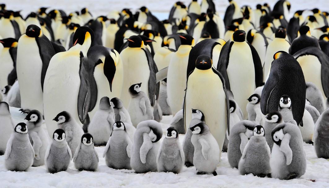 Las bajas temperaturas en Canadá provocaron que los encargados del zoológico llevaran a la especie fría a un sitio más cómodo y caliente