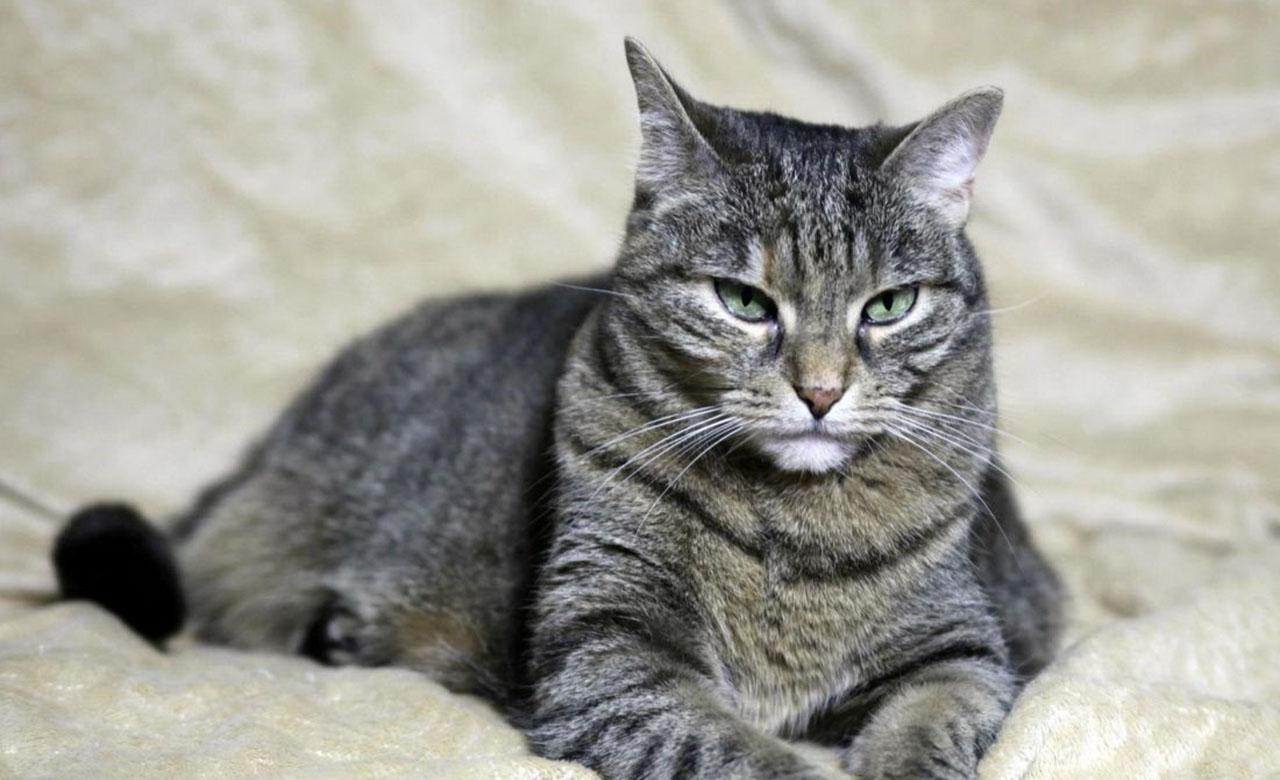 Gato se vuelve viral en Twitter