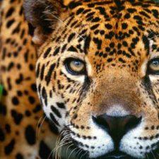 Crean proyecto para cuidar animales en peligro de extinción