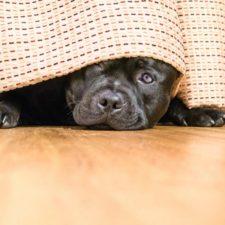 Trucos para que tu mascota no se asuste con los cohetes