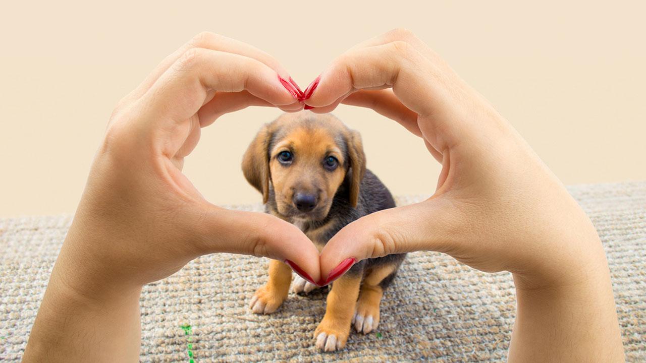 Su nombre es V-Pet y Gracias a ella podrás saber si tu animal ha salido de tu hogar mientras no estás en él, si juega o duerme