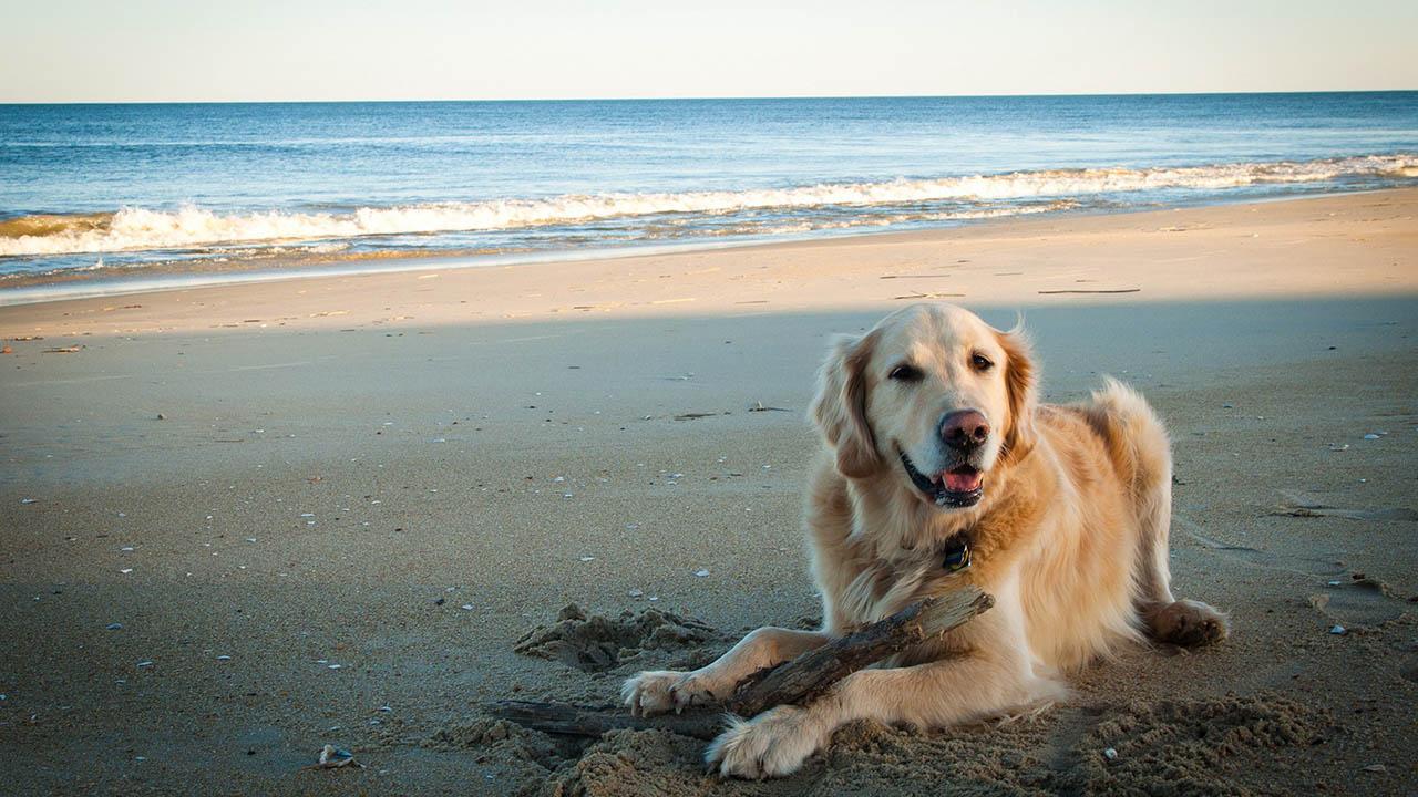 El hecho fue grabado por una familia en Salisbury Beach, Massachusetts, Estados Unidos