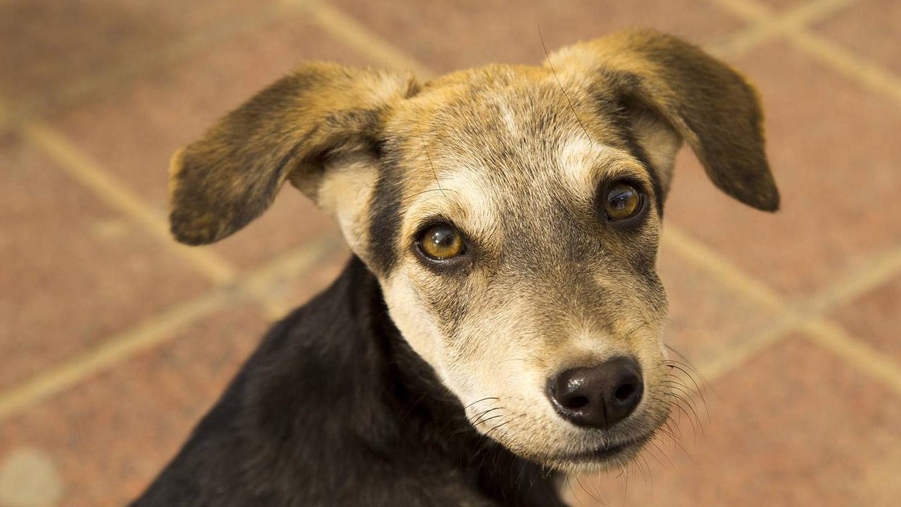 Las fundaciones buscan motivar a las personas a ser conscientes de la existencia de los caninos abandonados para ayudarlos de forma concreta