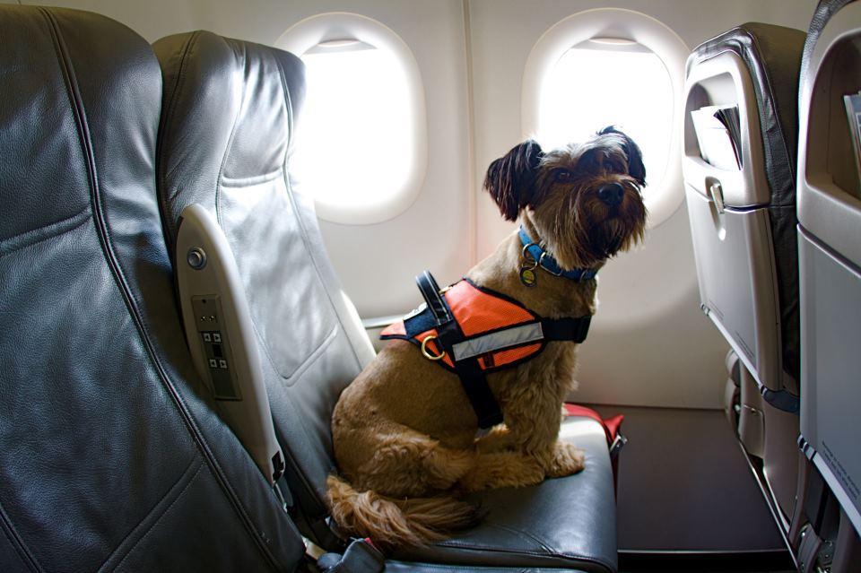 """Japan Airlines premia esta acción """"tarjetas de fidelidad"""" y las mismas ofrecen millas viajeras y descuentos en el veterinario"""