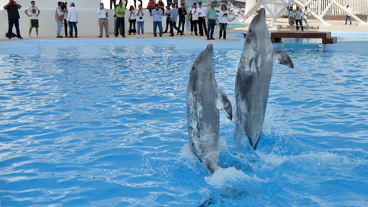 Según un estudio, los cetáceos pueden aprender diversos trucos temporalmente