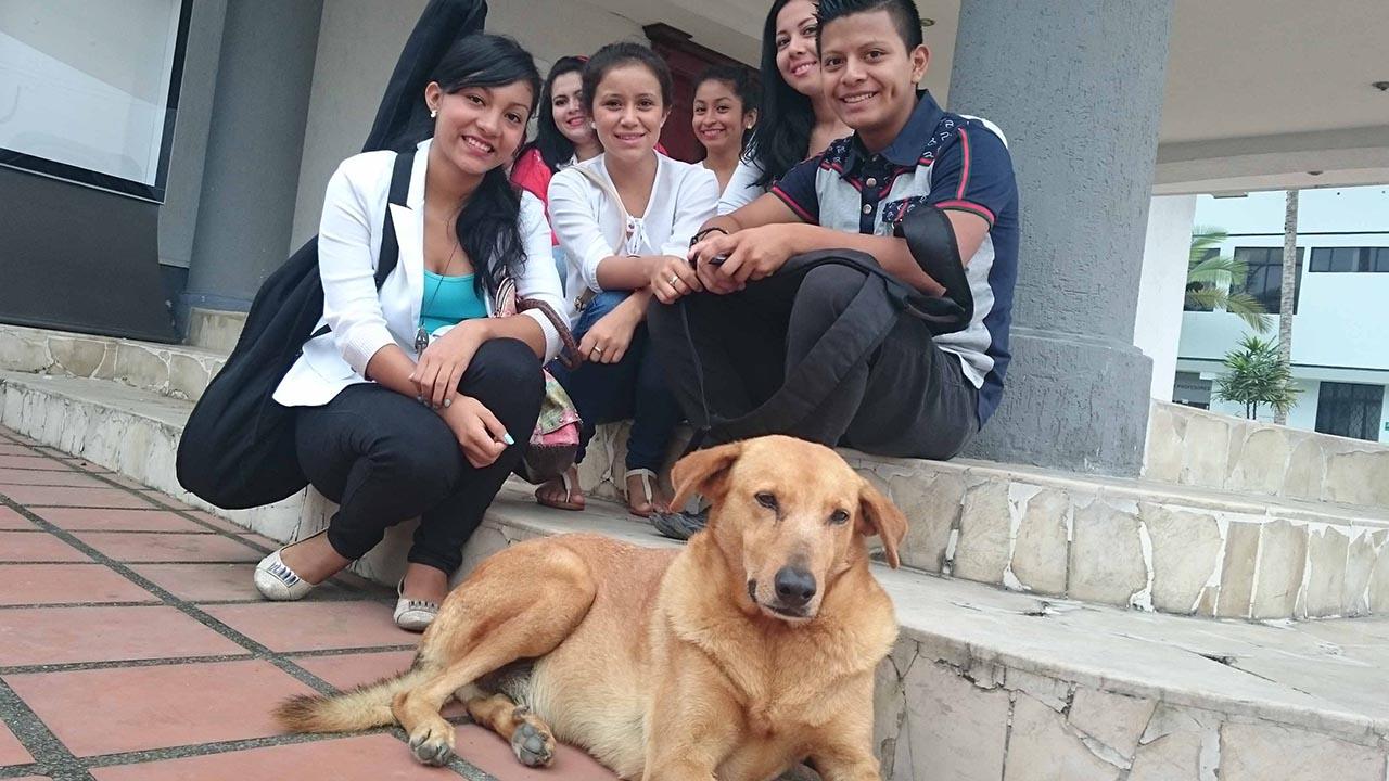 El Sumario - Tanto estudiantes como personal docente y administrativo podrán llevarse a sus mascotas a las labores en el casa de estudio luego de presentar unos requisitos