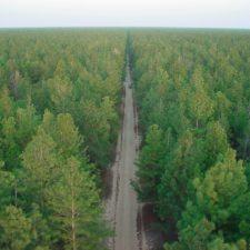 """""""El Bosque de Uverito"""" es considerado el más grande del mundo"""