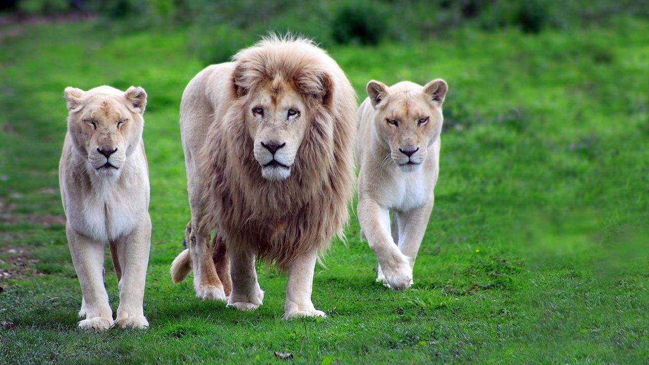 El momento fue captado por una fotógrafa aficionada en el West Midlands Safari Park