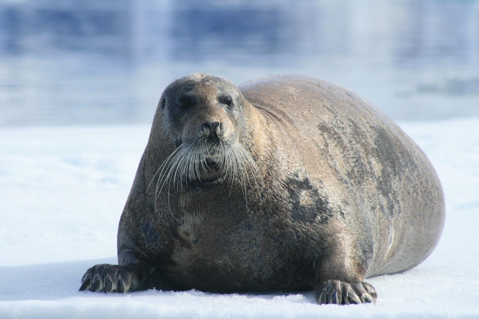 Los mamíferos huyeron al mar tras detectar la presencia de un grupo de turistas