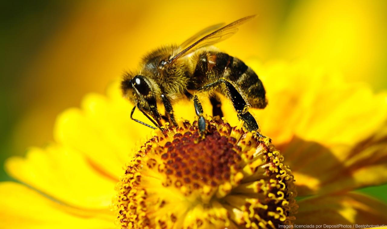 Megachile Plutón es el nombre científico del insecto que mide seis centímetros de largo