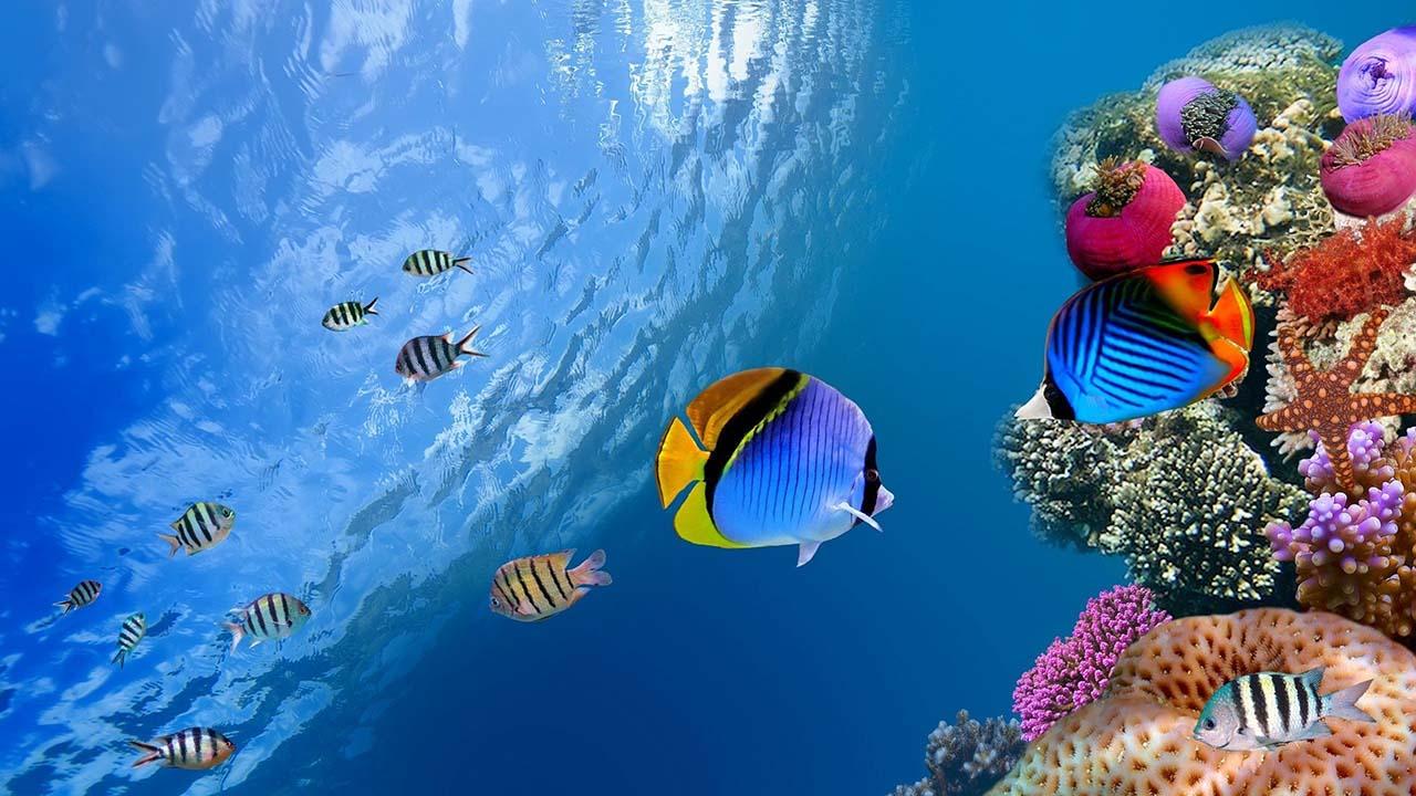 Un estudio reveló que las altas temperaturas perjudican más a las especies que viven en el océano que los que habitan en tierra firme