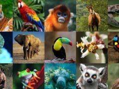 Conoce por qué se celebra el Día Mundial de los Animales el 4 de octubre