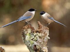 Las aves comparten comida con sus congéneres menos afortunados