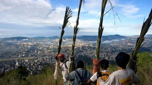 Palmeros de Chacao cumplirán con la tradición para el Domingo de Ramos
