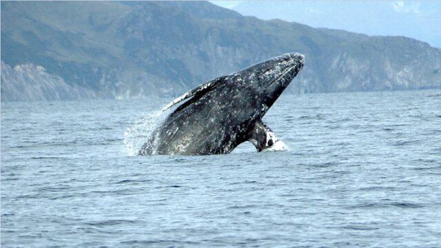 El Sumario - Tripulantes de una embarcación quedan encantados al ver a una joven ballena gris