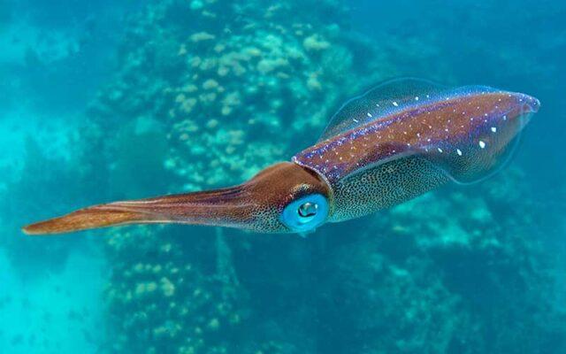 El Sumario - Así es como se ve la tinta de calamar flotando en el agua