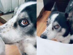 Conoce de qué manera un perro reclama la atención de su dueña