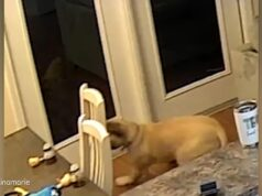 El Sumario - No podrás creer por qué un perro quedó despavorido
