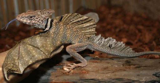 El Sumario - ¿Existen los dragones? Este peculiar animal causó revuelo en las redes sociales