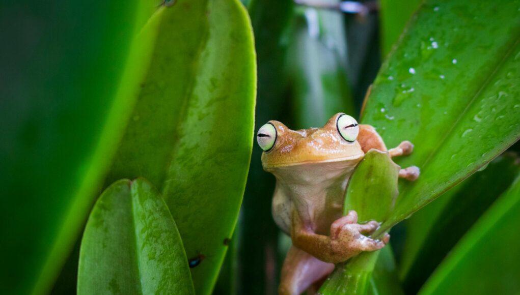 Fotografía de la Naturaleza, amor por la conservación ambiental