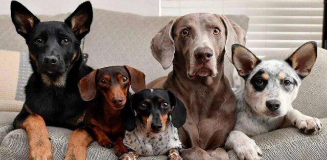 El Sumario - 21 de julio: Día Mundial del Perro