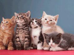 El Sumario - 8 de agosto Día Internacional del gato