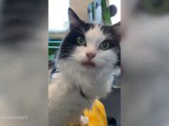 El Sumario - Mira cómo fueron las cinco horas de viaje de un gato en un tren