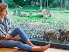 El Sumario – Un hotel de Reino Unido permite a sus huéspedes dormir dentro de un recinto de tigres